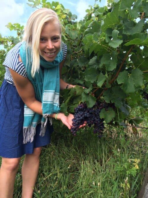 Kadarka – ett karaktärsfullt rödvin och en saftig favorit