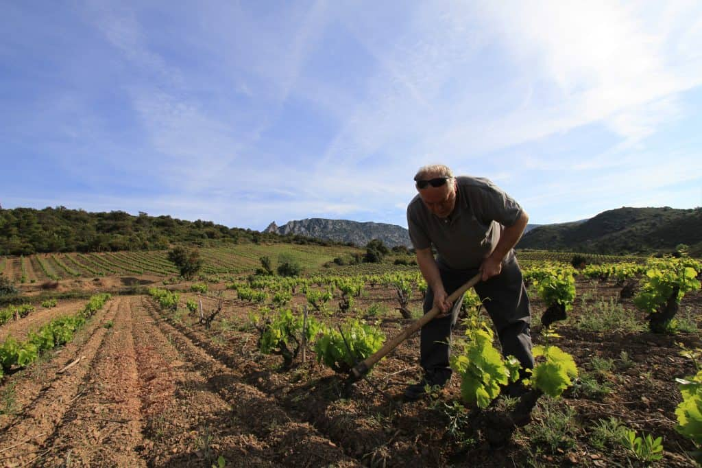 vingård Domaine Jean-Louis Vera