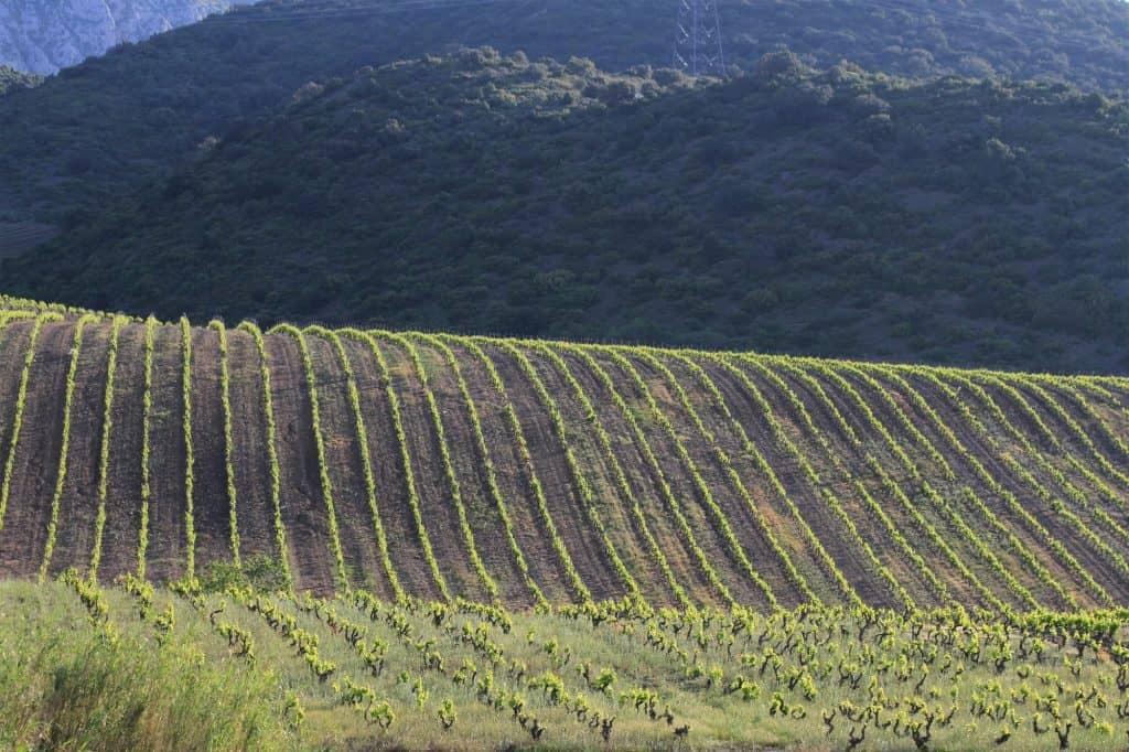 Det kulliga landskapet i Maury, Languedoc