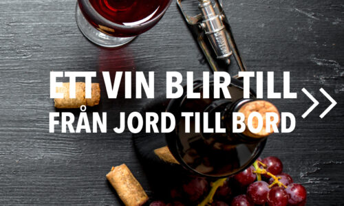 Vintillverkning guide hungry wines