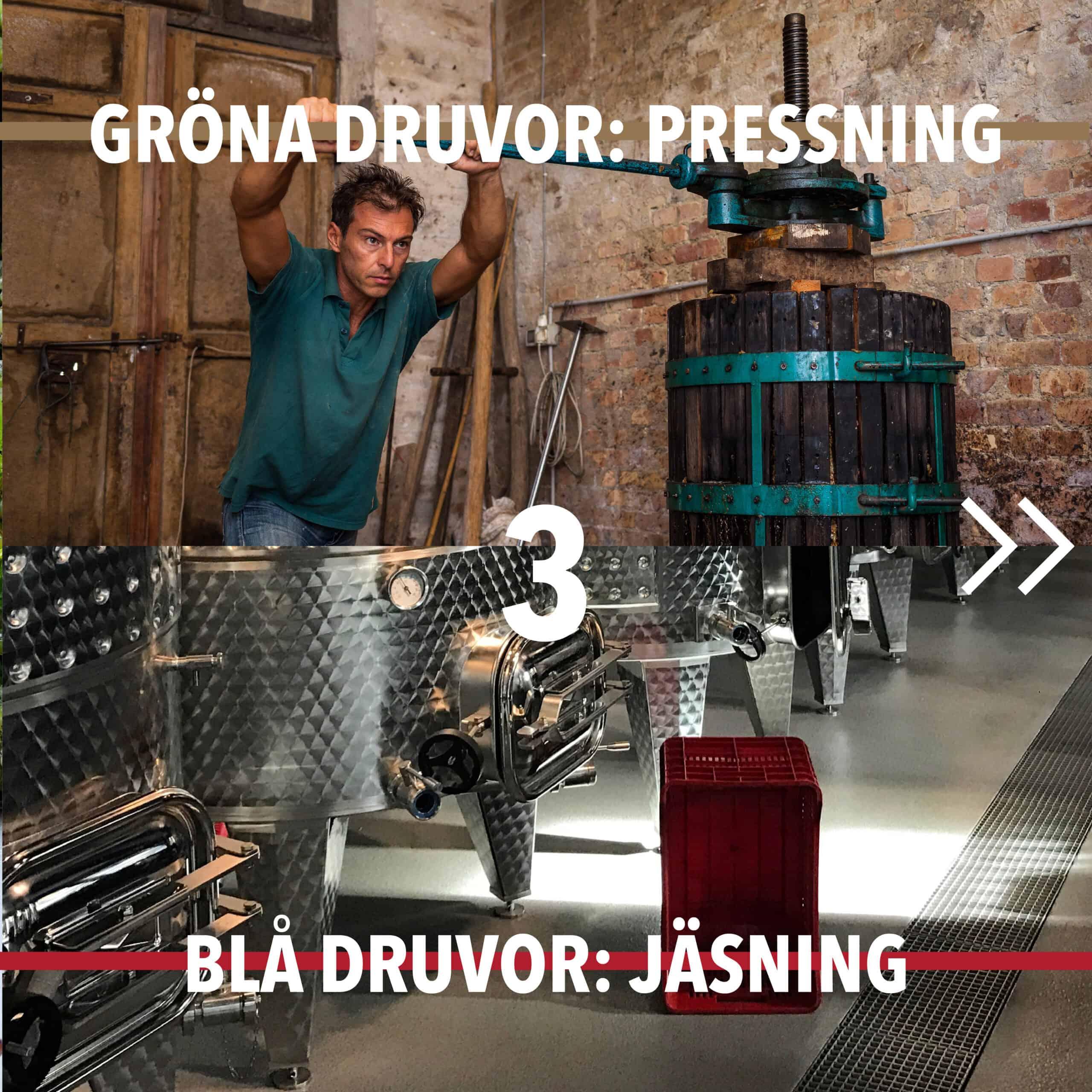 Vintillverkning guide hungry wines: pressning jäsning