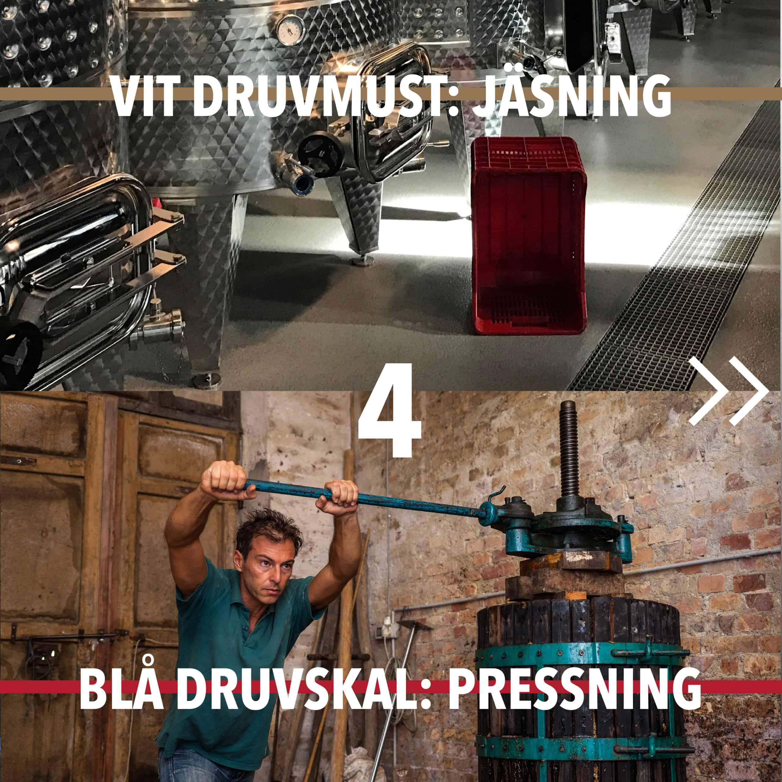Vintillverkning guide hungry wines: jäsning pressning