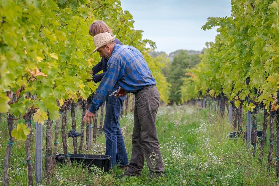 Biodynamiskt vin – filosofi, praktik och dagens viner