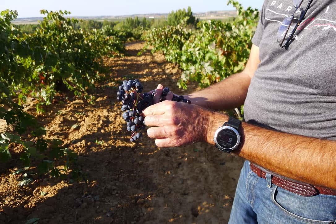 Naturviner – dess historia och metoden bakom vinerna
