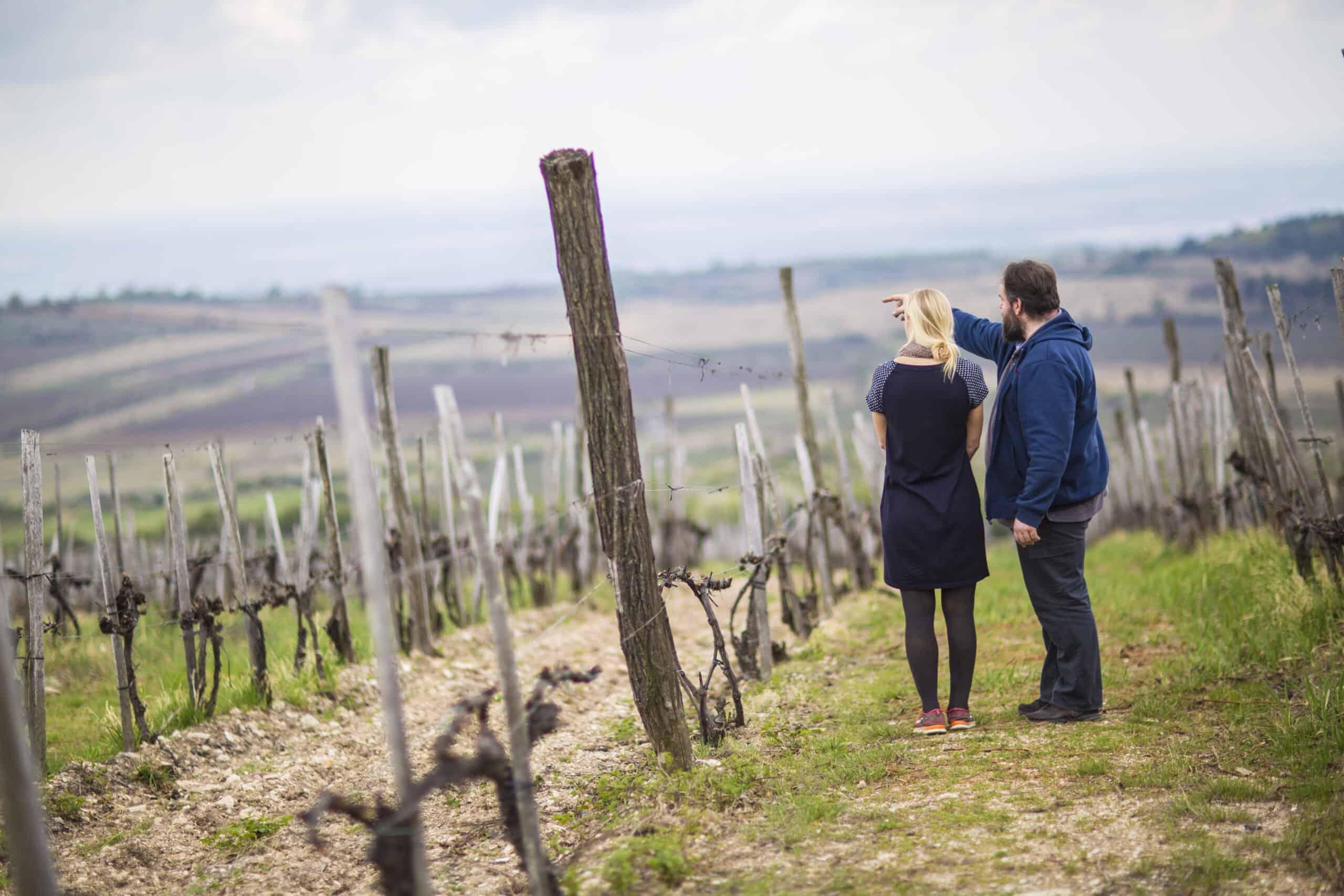 Året i vingården – månad för månad