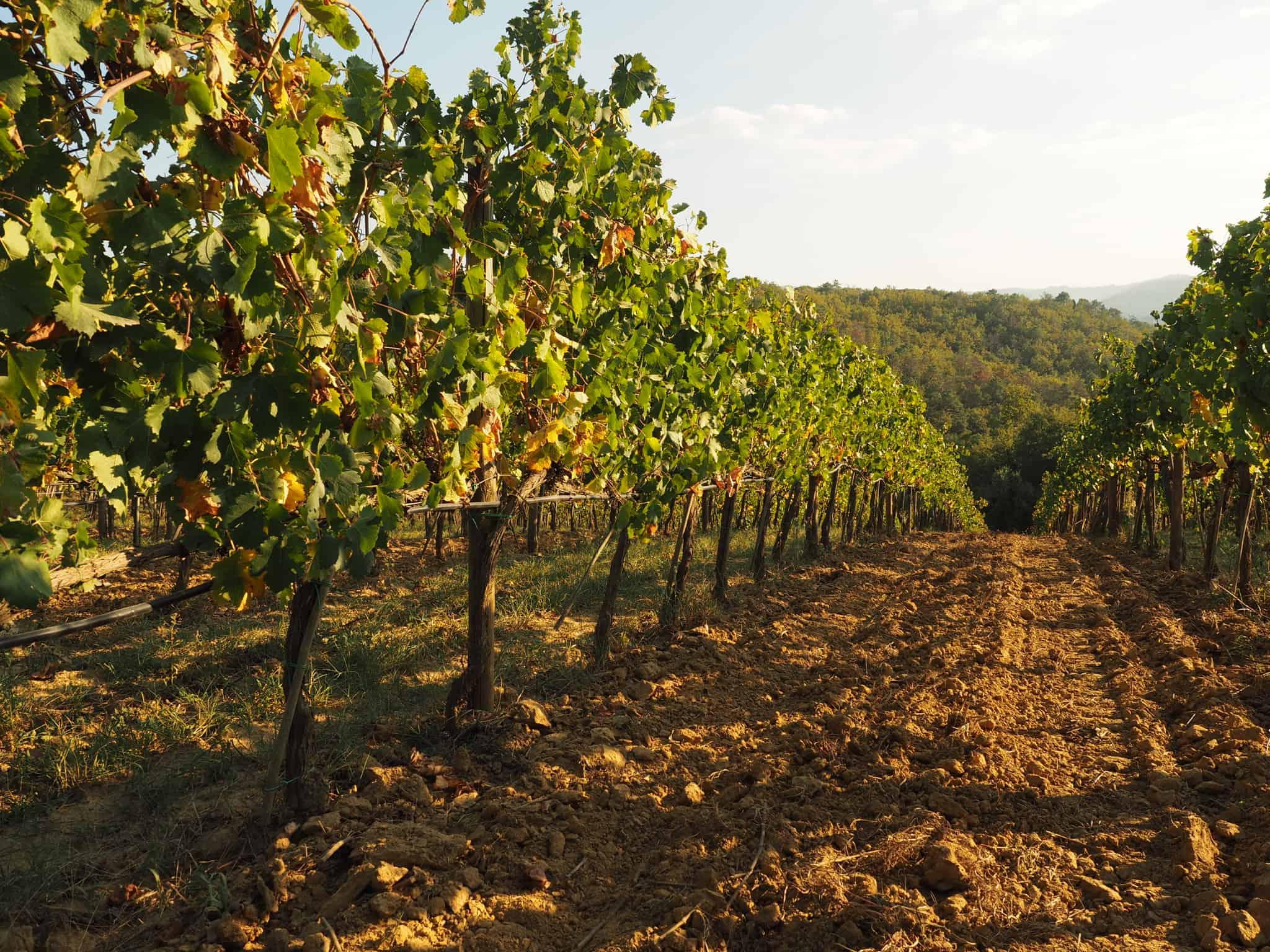 Året i vingården
